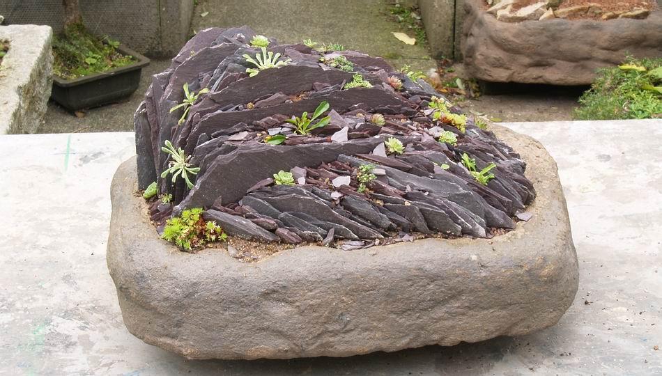 Scottish Rock Garden Club Bulb Log
