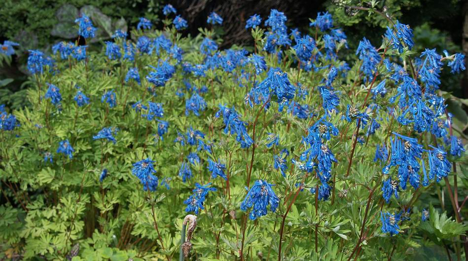 Scottish Rock Garden Club Gt Bulb Log